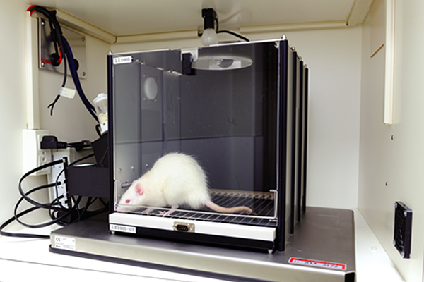 【Skinner box】<br>The Skinner box is designed to enable rats to learn the pressing of a lever.